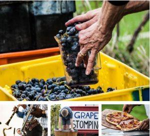 Hunt Country Vineyards 31st Annual Harvest Festival on Keuka lake in the finger lakes